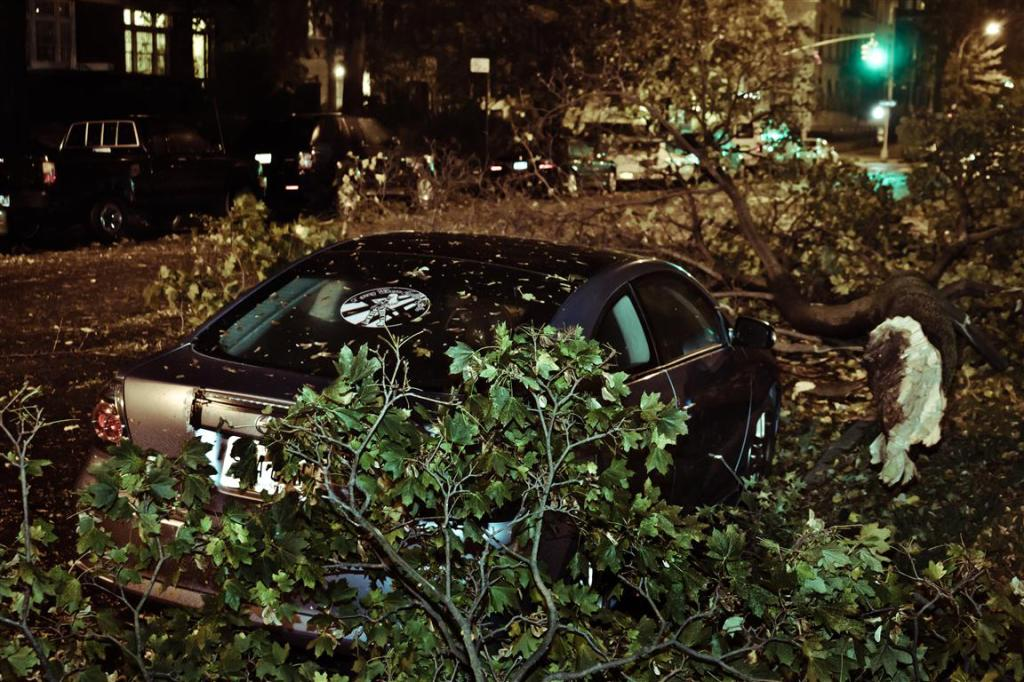 Branche arraché par Sandy 2012, juste de l'autre côté; mon camion.